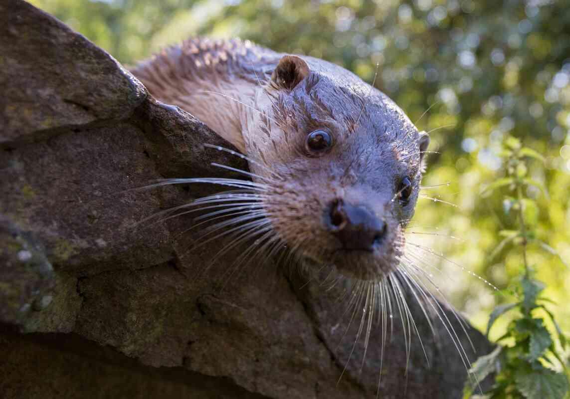 Otterstark der Wildpark Pforzheim
